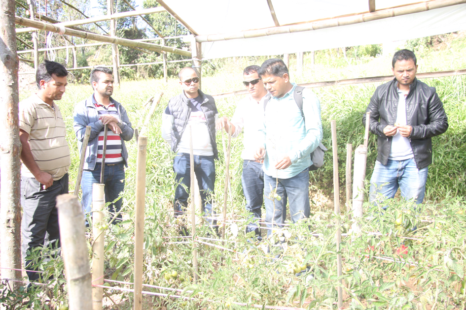 Photo 3 Pax Earth team observing tomato cultivation in a tunnel
